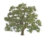 JTT: O Scale Scenic Live Oak - Single Pack