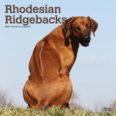 Rhodesian Ridgebacks 2019 Square Wall Calendar by Inc Browntrout Publishers image