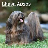 Lhasa Apsos 2020 Square Wall Calendar by Inc Browntrout Publishers