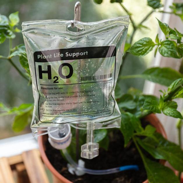 Bubblegum Stuff: Plant Life Support