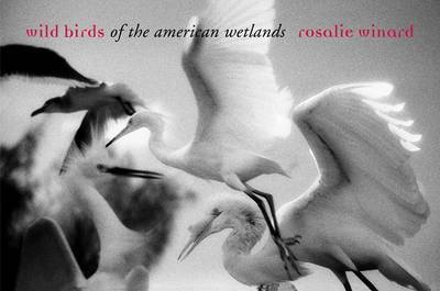 Wild Birds of the American Wetlands by Rosalie Winard