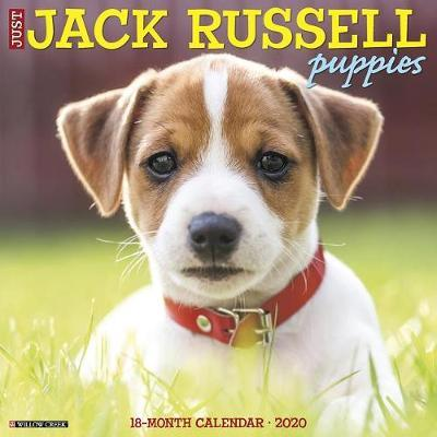 Just Jack Russell Puppies 2020 Wall Calendar (Dog Breed
