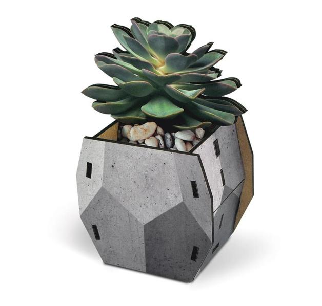 Fred Pop Desk Plants - Echeveria