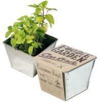 Foodie Garden - Grow your own Cinnamon Basil