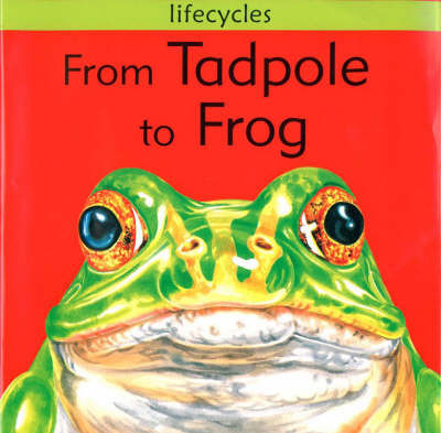 From Tadpole to Frog by David Stewart