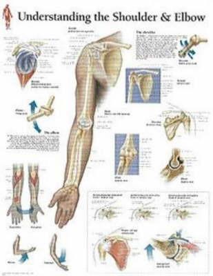 Understanding Shoulder and Elbow image
