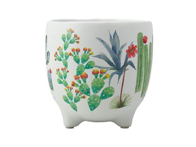 Maxwell & Williams: Royal Botanic Garden Arid Garden Planter Pot