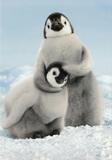 Avanti Greeting Card - Feel the Love Penguins