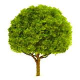 "JTT Scenic Oak Trees 2.5"" (2pk) - H0 Scale"