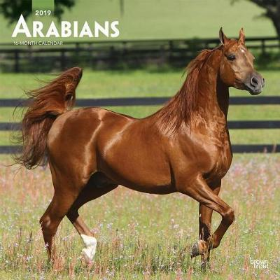Arabians 2019 Square by Inc Browntrout Publishers