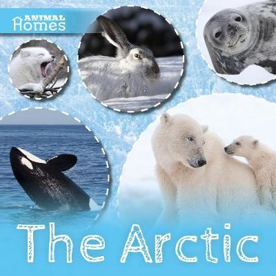 The Arctic by Holly Duhig