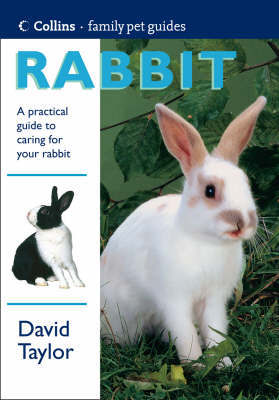 Rabbit by David Taylor