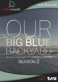 Our Big Blue Backyard - Season 2 on DVD
