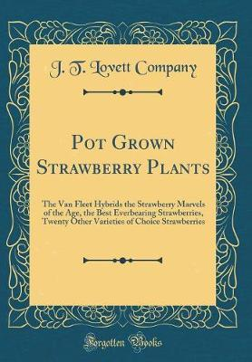 Pot Grown Strawberry Plants by J T Lovett Company