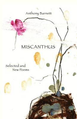 Miscanthus by Anthony Barnett