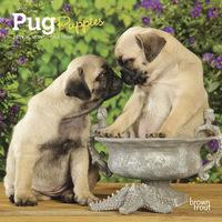 Pug Puppies 2019 Mini Wall Calendar