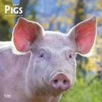 Pigs 2019 Square Wall Calendar by Inc Browntrout Publishers