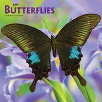 Butterflies 2019 Square Wall Calendar by Inc Browntrout Publishers image