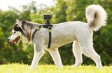Sony AKADM1 Action Cam Dog Harness