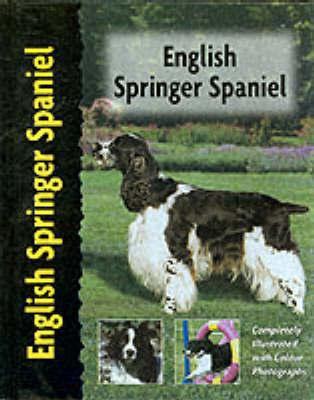 English Springer Spaniel by Haja Van Wessem