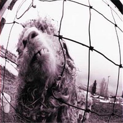 VS (LP) by Pearl Jam