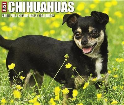Just Chihuahuas 2019 Box Calendar (Dog Breed Calendar) by Willow Creek Press