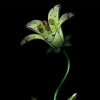 Regal: Solar Tiger Lily Stake - White image