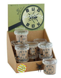 Seedling - Magnifying Bug Box