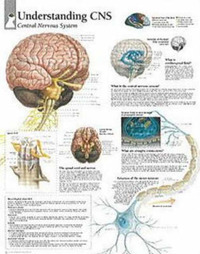 Understanding CNS image