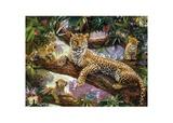 3D LiveLife: Tree Top Leopards
