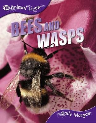 Bees and Wasps by Sally Morgan image
