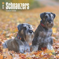 Schnauzers International Edition 2018 Square Wall Calendar