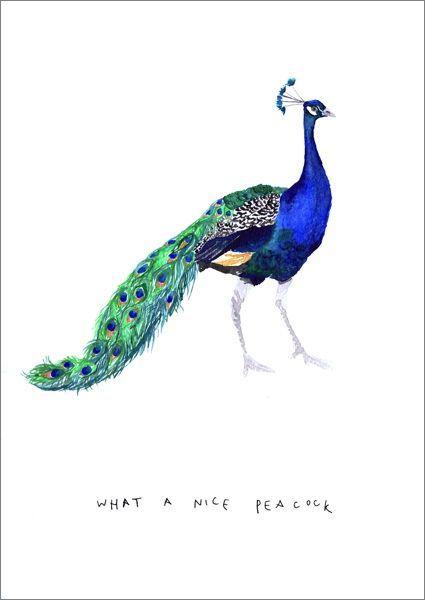 What A Nice Peacock Anniversary Love Card