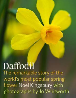 Daffodil the Remarkable Story of the Worlds Most Popular Spring Flower by Noel Kingsbury image