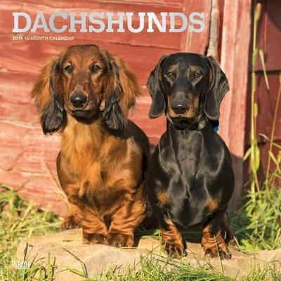 Dachshunds 2019 Square Wall Calendar by Inc Browntrout Publishers