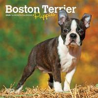 Boston Terrier Puppies 2020 Mini Wall Calendar by Inc Browntrout Publishers