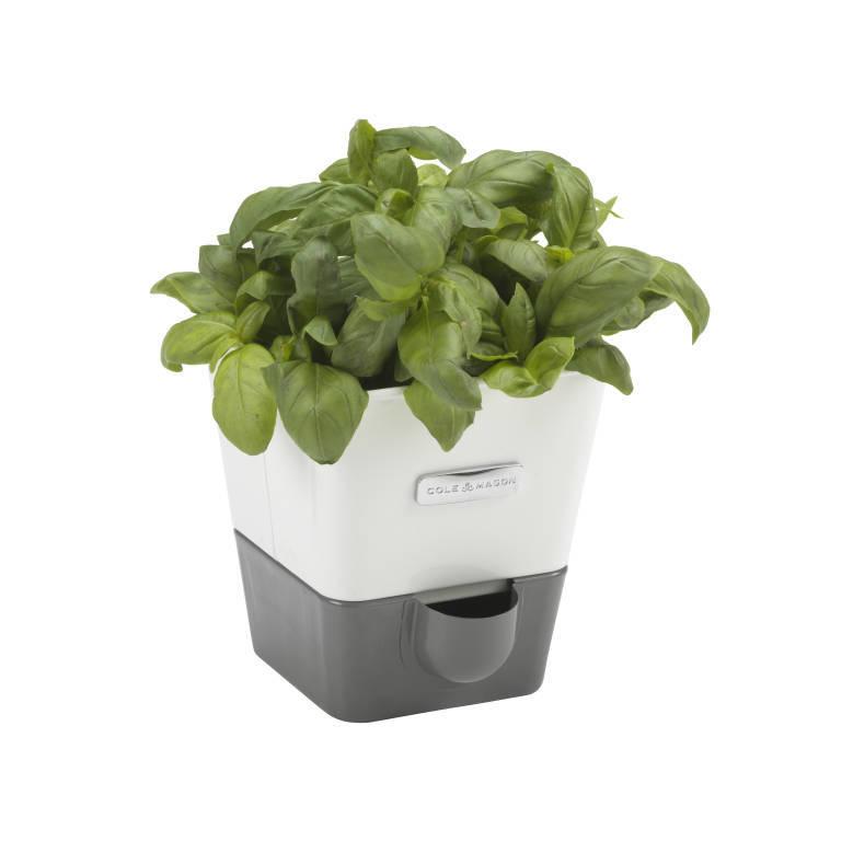 Cole & Mason: Self Watering Herb Keeper - Single image