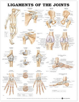 Ligaments of the Joints Anatomical Chart image