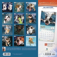 Underwater Puppies 2019 Square Wall Calendar by Inc Browntrout Publishers image