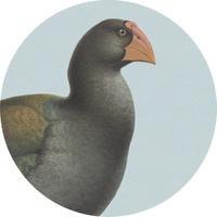 100 Percent NZ - Takahe Ceramic Coaster