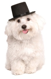 Rubie's: Top Hat - Pet Hat (Small/Medium)