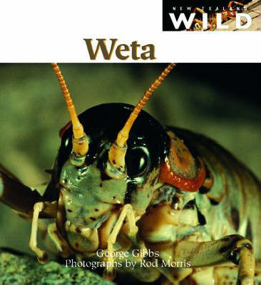 Weta by George Gibbs image