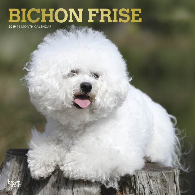 Bichon Frise 2019 Square Wall Calendar by Inc Browntrout Publishers
