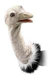 Folkmanis Stage Puppet - Ostrich