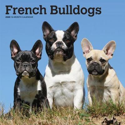 French Bulldogs 2020 Square Wall Calendar