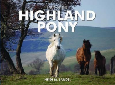 Spirit of the Highland Pony by Heidi M. Sands
