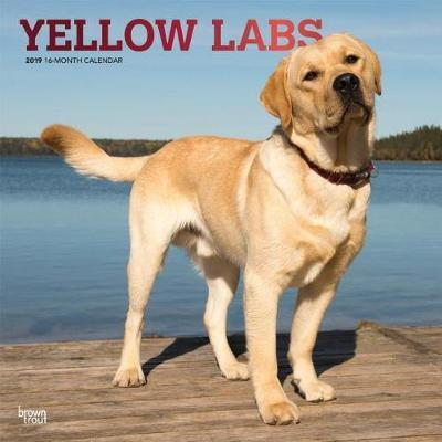 Labrador Retrievers, Yellow 2019 Square Wall Calendar by Inc Browntrout Publishers
