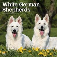 German Shepherds, White 2020 Square Wall Calendar by Inc Browntrout Publishers