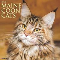 Just Maine Coon Cats 2020 Wall Calendar by Willow Creek Press image