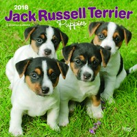 Jack Russell Terrier Puppies 2018 Square Wall Calendar